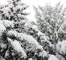 Spring Snowstorm by Jim Sauchyn