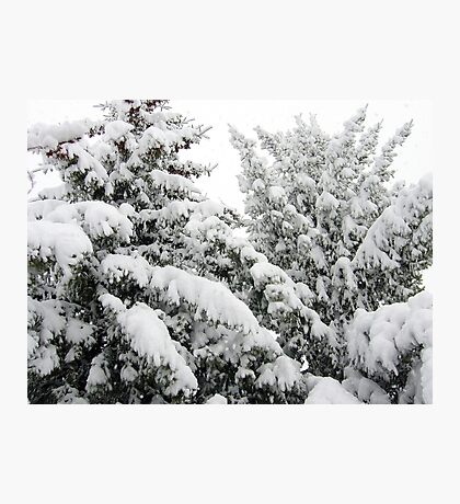 Spring Snowstorm Photographic Print