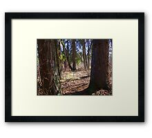 Forest Giants Framed Print