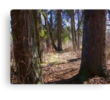 Forest Giants Canvas Print