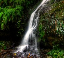 Nature's Silk by Brad Woodman