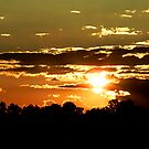 Piney Sunset by Sharon Woerner