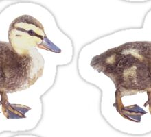 Duck Stickers Sticker