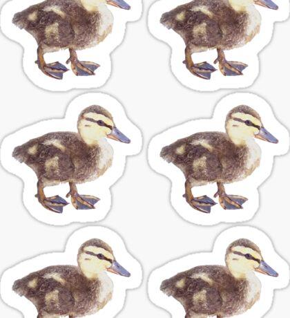Duck Stickers Sticker