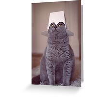 fig 1.4 - Cat with Chinese takeaway box on head Greeting Card
