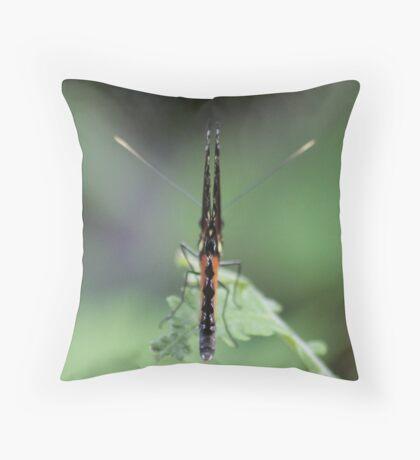 Butterfly Macro Throw Pillow