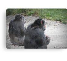 Chimp Friends Canvas Print
