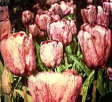 The Beauty of Spring by Cynthia Broomfield