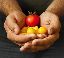 Garden Harvest by Rebbecca Romine