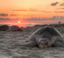 Turtle and Sunset by Claudio Giovenzana