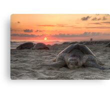 Turtle and Sunset Canvas Print