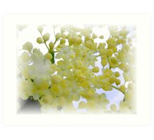 Elderflowers Art Print