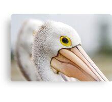 A Pelicans' Gaze Metal Print