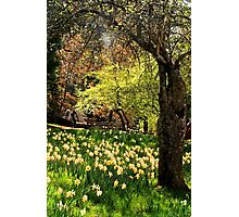 A Spring Stroll Photographic Print