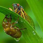 Cicada with Nymphal Skin by Lynn Gedeon