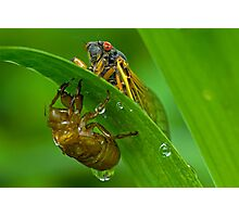 Cicada with Nymphal Skin Photographic Print