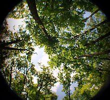Woods by samspix