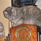 Naughty Kitty ! (Not Grandma's Clock) by judygal
