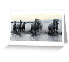 The White Horses of Camargue Greeting Card