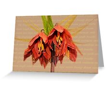 Lily Bloom Greeting Card