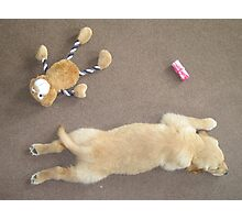dog yoga 14 Photographic Print
