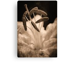 Beautiful End Canvas Print