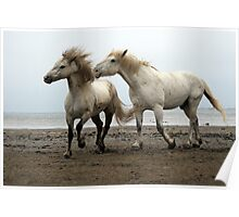 Camargue White Horses Poster