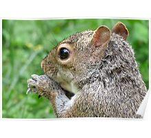 Through A Squirrrel's Eye Poster
