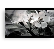 Fruit Tree Blossoms  Canvas Print