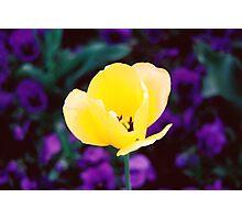 Sunny Side Up Photographic Print