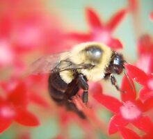 Bumblebee Hard At Work by shutterqueenink