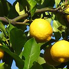Luscious Lemons in the Light by M-EK