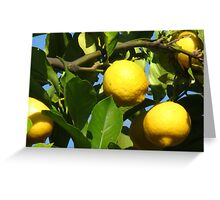Luscious Lemons in the Light Greeting Card