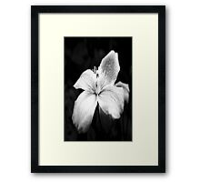 Clematis - Black and White Framed Print