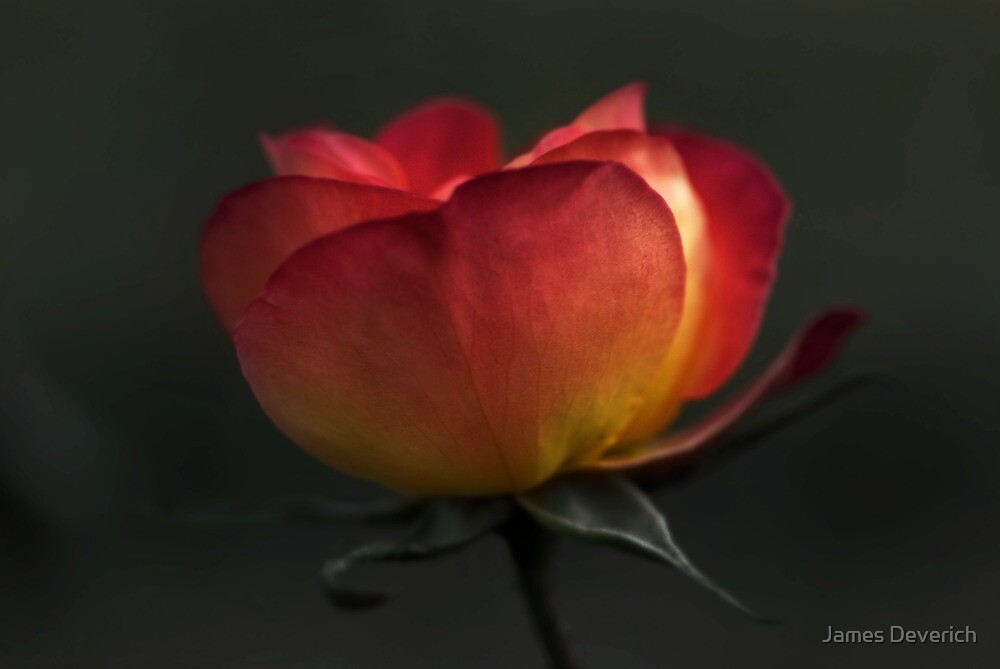 Flower Revisited by James Deverich
