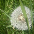 Dandelion in the Grass by Jessica Skidmore