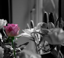 The Pink Rose by StantonP
