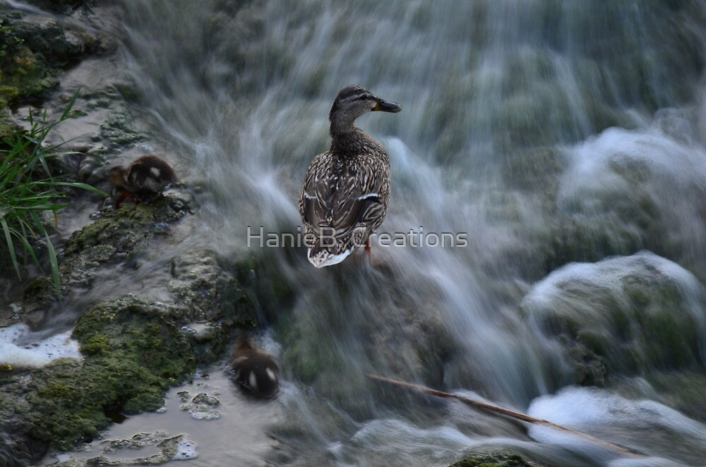 Streaming waters & Ducks by HanieBCreations