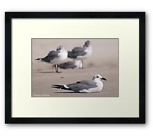 Guard Gull Framed Print