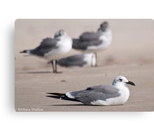 Guard Gull Canvas Print