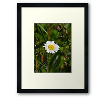 He loves me, He loves me not...... Framed Print