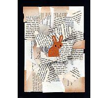 Animale #3 Photographic Print