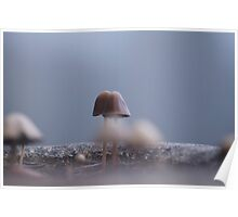 Fungus amongst the mist Poster