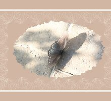 Butterflly in Beige by Rosalie Scanlon