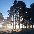 Fog in the pines by Tim Coleman