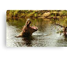 Hippo in the Zambesi Canvas Print
