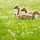 Baby Joys by Tracy Riddell
