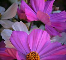Cosmo Light by Barbara  Brown