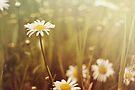 A Daisy Day by KBritt