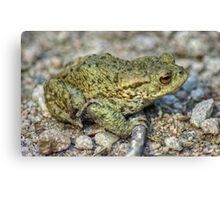 The Toad And The Hitchhiker Canvas Print